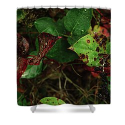 Season Color Shower Curtain