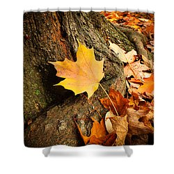Seasonal Beauty  Shower Curtain