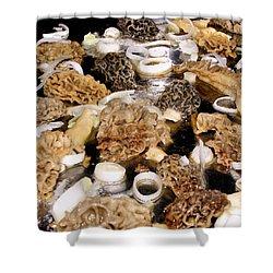 Season's First - Morel Mushrooms Shower Curtain