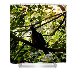 Shower Curtain featuring the photograph Seasons Will Change by Bernd Hau
