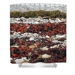 Seaweed Shower Curtain