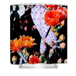 Second Day Color Shower Curtain by M Diane Bonaparte