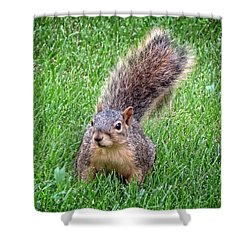 Secret Squirrel Shower Curtain by Kyle West