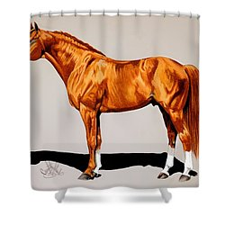 Secretariat - Triple Crown Winner By 31 Lengths Shower Curtain