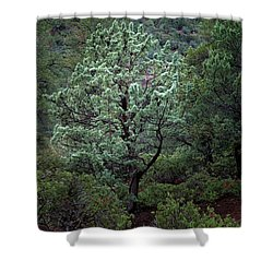 Sedona Tree #1 Shower Curtain