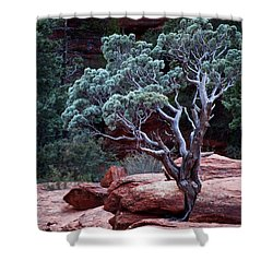 Sedona Tree #3 Shower Curtain