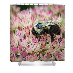 Shower Curtain featuring the photograph Sedum Bumbler by Bill Pevlor