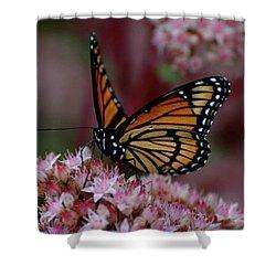 Sedum Butterfly Shower Curtain