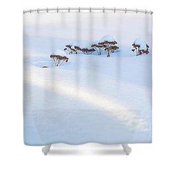 Sedum Sprouts In Winter-8210 Shower Curtain