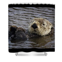 See Otter Posing Shower Curtain