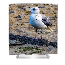 Shower Curtain featuring the photograph See The Gull by Kendall McKernon