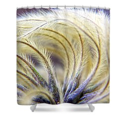 Seedheads Shower Curtain by Brian Roscorla