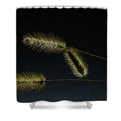 Seeds Of Life Shower Curtain by Christopher L Thomley