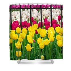 Segregated Spring Shower Curtain