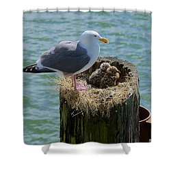 Seagull Family Shower Curtain by Richard J Cassato