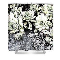 Sempervivum - Ebony And Ivory  Shower Curtain by Janine Riley
