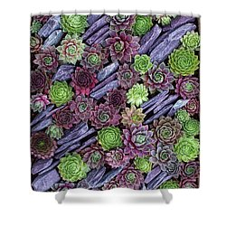 Shower Curtain featuring the photograph Sempervivums Pattern by Tim Gainey