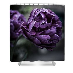 Sensational Dreams Shower Curtain by Miguel Winterpacht