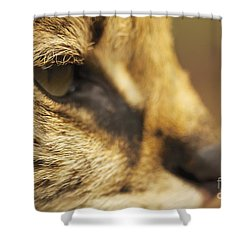 Shower Curtain featuring the photograph Sensus by Gary Bridger