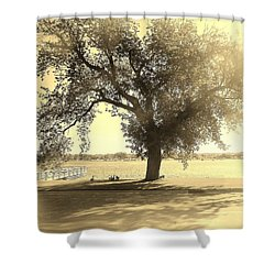 Sepia Colors In A Tree Shower Curtain