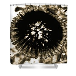 Sepia Dandelion Shower Curtain