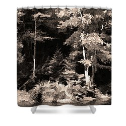 Shower Curtain featuring the photograph Sepia Forest by Betsy Zimmerli