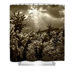 Shower Curtain featuring the photograph Sepia Tone Of Cholla Cactus Garden Bathed In Sunlight by Randall Nyhof