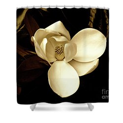Sepia-toned Magnolia Shower Curtain
