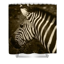 Sepia Zebra Shower Curtain
