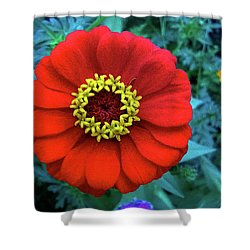 September Red Beauty Shower Curtain