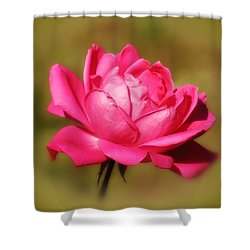 September Rose Up Close Shower Curtain by MTBobbins Photography