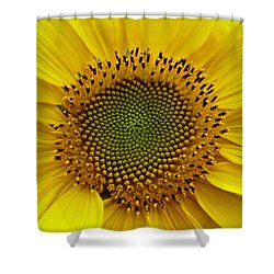 September Sunflower Shower Curtain by Richard Cummings