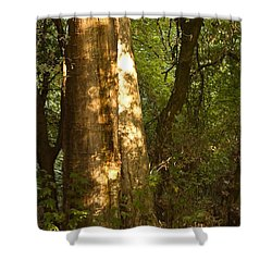 Shower Curtain featuring the photograph September Sycamore by Larry Darnell