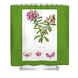 Shower Curtain featuring the painting Septemberbossie  Polygala Myrtifolia by Heidi Kriel