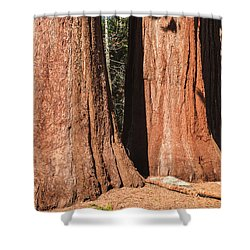 Sequoia Shower Curtain by Muhie Kanawati