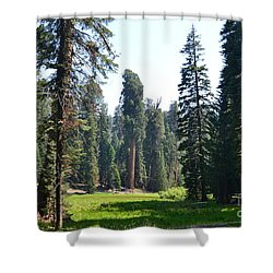 Sequoia National Forest Shower Curtain