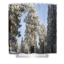 Sequoia National Park 4 Shower Curtain