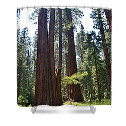 Sequoia National Park Shower Curtain