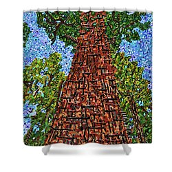 Sequoia National Park Shower Curtain by Micah Mullen