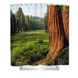Sequoia Np Crescent Meadows Shower Curtain