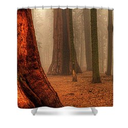 Sequoias Touching The Clouds Shower Curtain