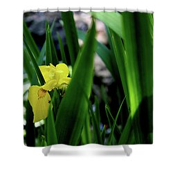 Shower Curtain featuring the photograph Serendipity by Hanne Lore Koehler