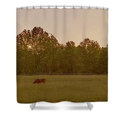 Serene Pasture Shower Curtain by Jean Haynes