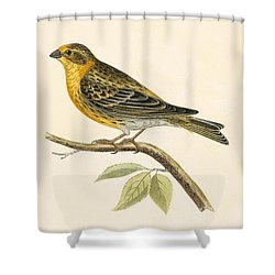 Serin Finch Shower Curtain by English School