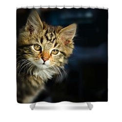 Serious Cat Portrait Shower Curtain