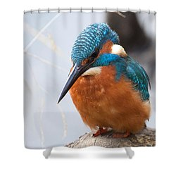 Serious Kingfisher Shower Curtain
