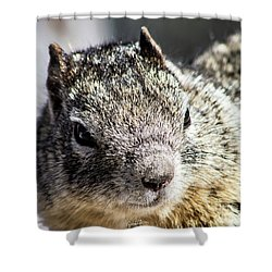 Serious Squirrel Shower Curtain