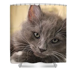 Seriously Bro Just Stop With The Photos  Shower Curtain by Scott D Van Osdol