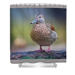 Shower Curtain featuring the photograph Seriously Cute by Cindy Lark Hartman