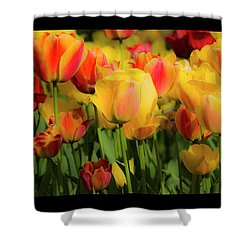 Shower Curtain featuring the photograph Seriously Spring - Bordered by Wendy Wilton